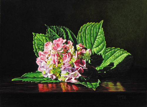 Hydrangea Blossom in Sunlight small file