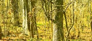 war - woods