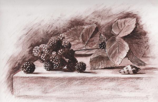 Blackberry sketch