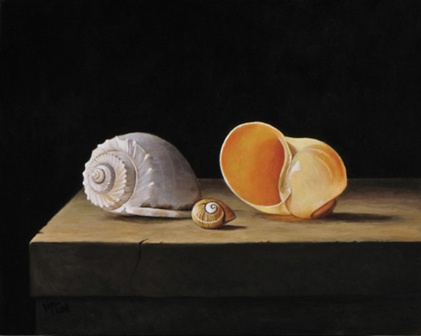Three Shells on Stone Table 3